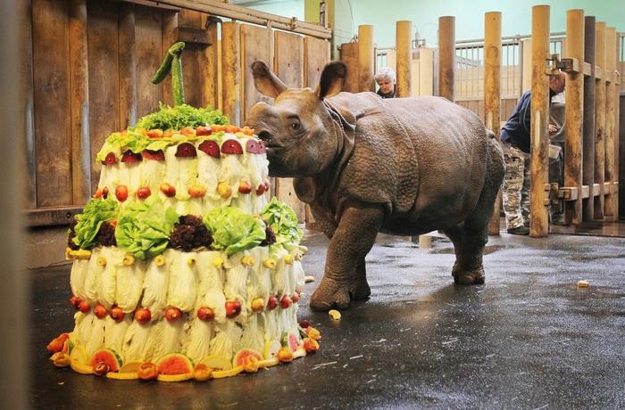 Картинки по запросу день рождение носорога.