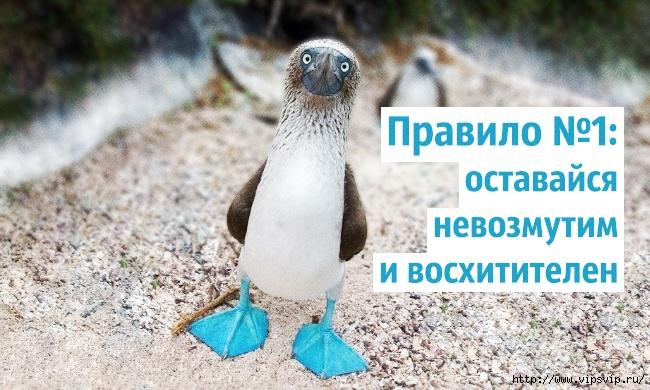 5745884_Pravila_jizni_golybonogih_olysh_1 (650x390, 226Kb)