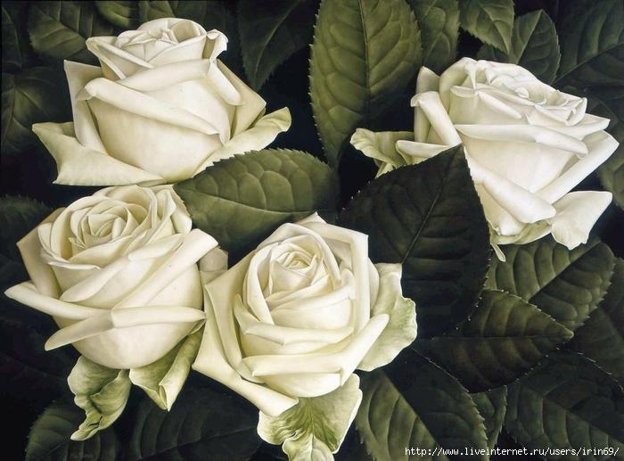 white-roses (700x517, 270Kb)
