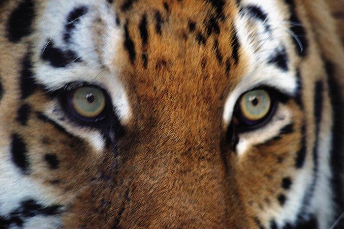 eyes27062014192109 (700x466, 83Kb)