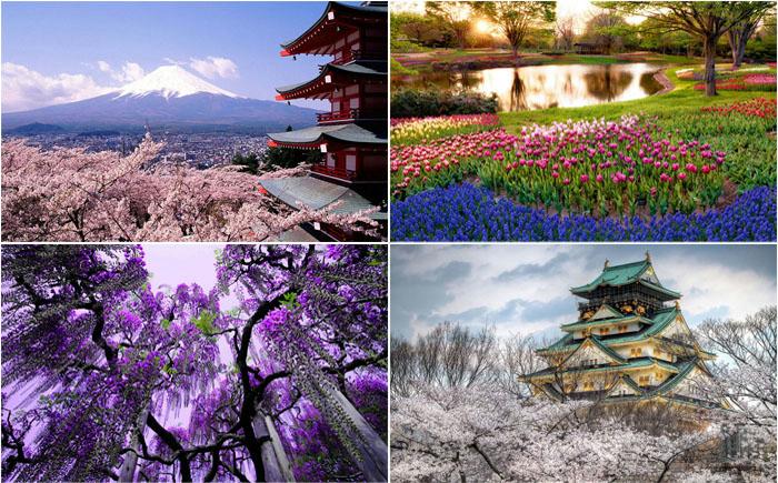 Spring-in-Japan-0 (700x435, 449Kb)