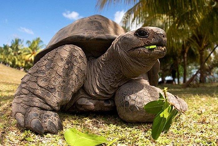 Сейшельские острова фото текст