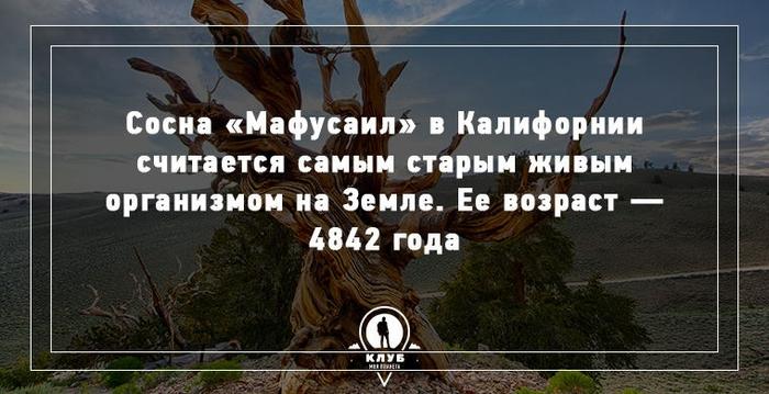 4 (700x359, 201Kb)