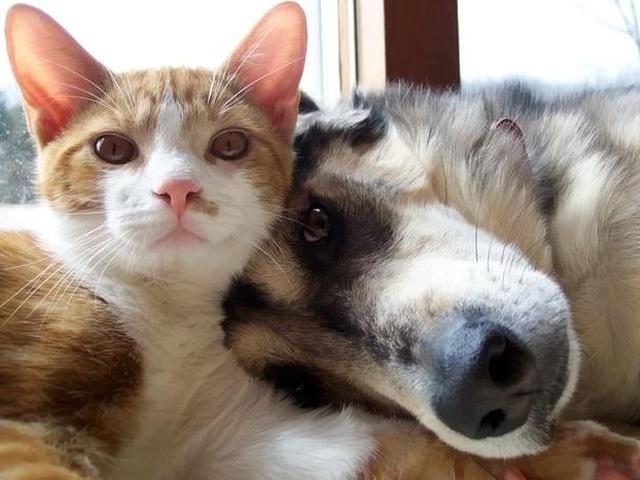Про дружбу котов и собак