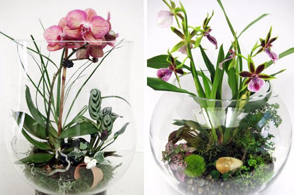 florarium-svoimi-rukami-2324 (600x399, 237Kb)