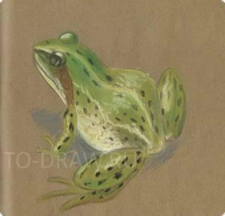 84_lyagushka-frog-005 (320x307, 45Kb)