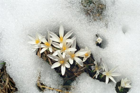 зимой под снегом/3881693_ (590x393, 119Kb)