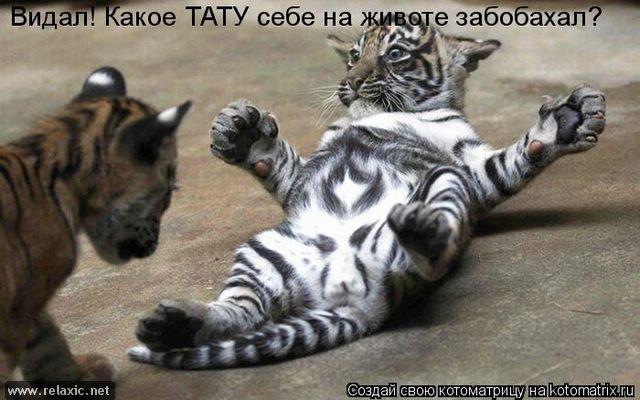 kotomatrix_0332 (640x400, 202Kb)