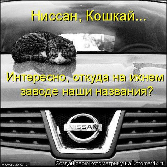 kotomatrix_0532 (640x641, 279Kb)