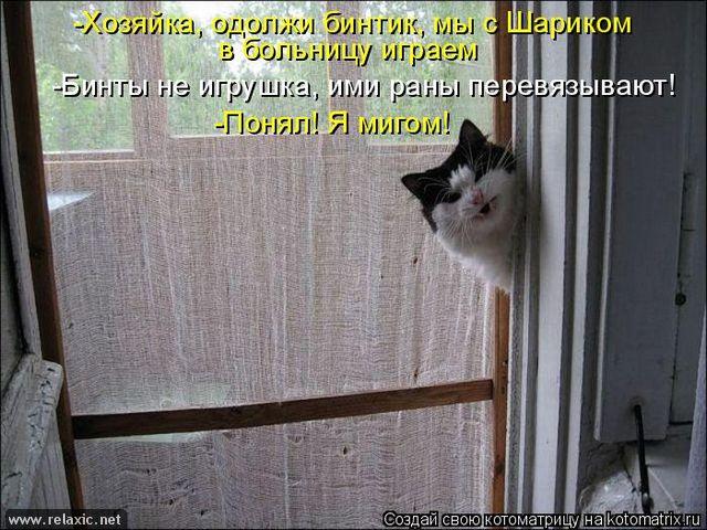 kotomatrix_0592 (640x480, 264Kb)