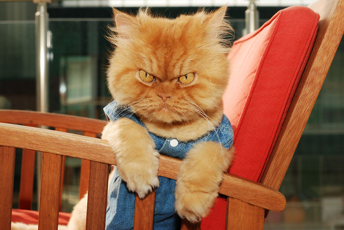 garfi-evil-grumpy-persian-cat-12__700 (700x468, 87Kb)