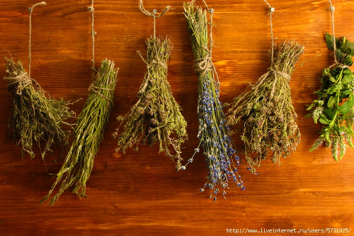 bigstock-dried-herbs-on-wooden-backgro-37151818 (700x466, 359Kb)