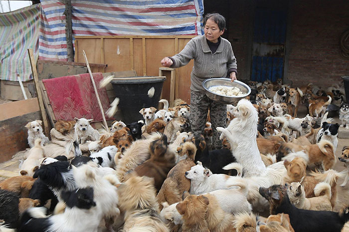 china-1300-stray-dog-shelter-wang-yanfang-coverimage (700x467, 104Kb)