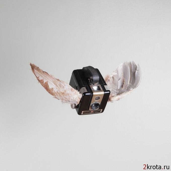 PaulOctaviousbirds01[1] (680x680, 83Kb)