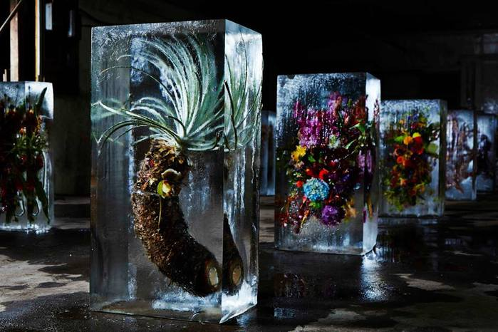 iced-flowers-makoto-azuma-51 (700x466, 59Kb)