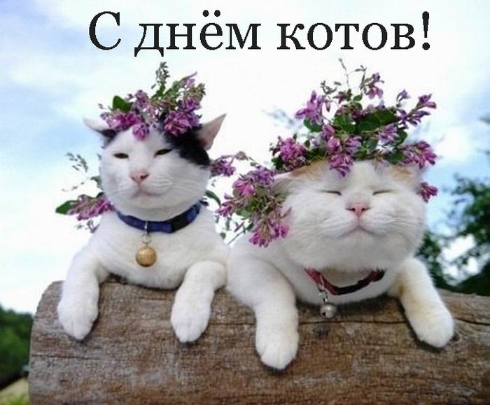 2835299_Izmenenie_razmera_dva_sinvykyzv50 (700x579, 240Kb)
