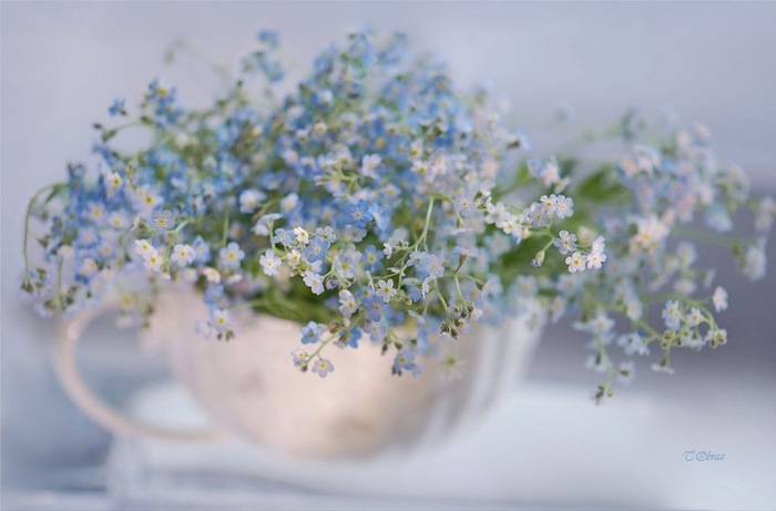 108427111_still_life_in_flowers_04 (700x461, 63Kb)