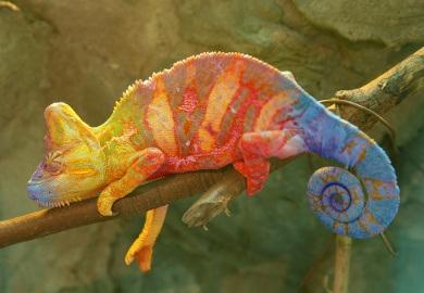 chameleon (390x270, 39Kb)