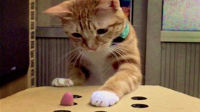 cat_plays (700x392, 88Kb)