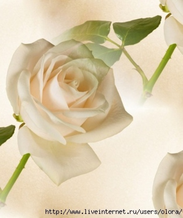 5446715e66df6ук роза (488x600, 87Kb)