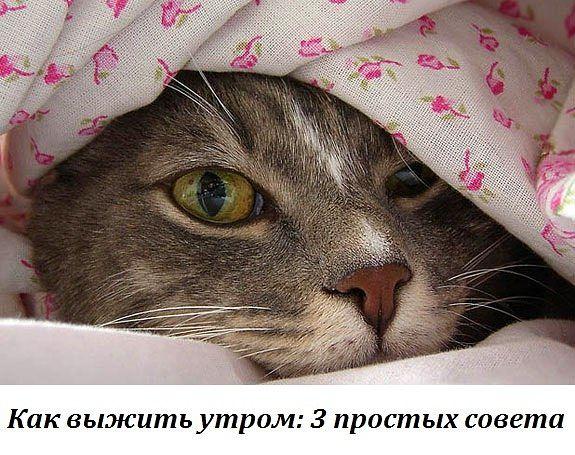 4386599_Kak_vijit_ytrom (575x455, 75Kb)