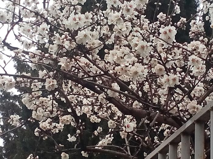 весна (700x525, 424Kb)