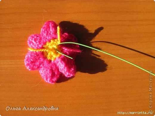 Цветок в горшочке - ПРИМУЛА крючком (3) (520x390, 118Kb)