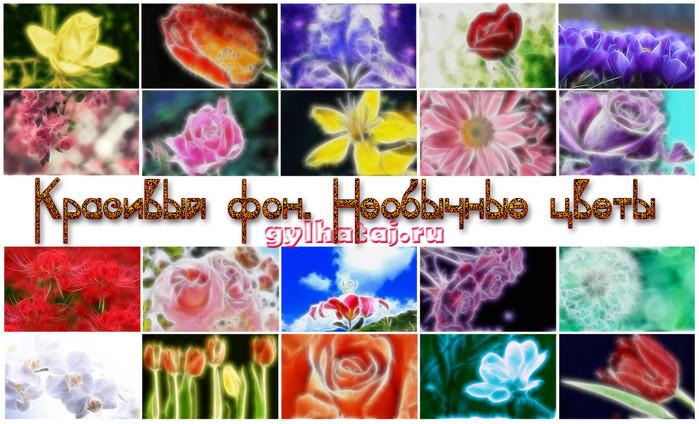 krasivyj-fon-neobychnye-cvety (700x424, 136Kb)