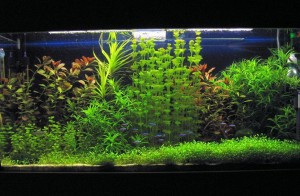 5835628_aquarium_naturalist_if_ua300x196_1_ (300x196, 24Kb)