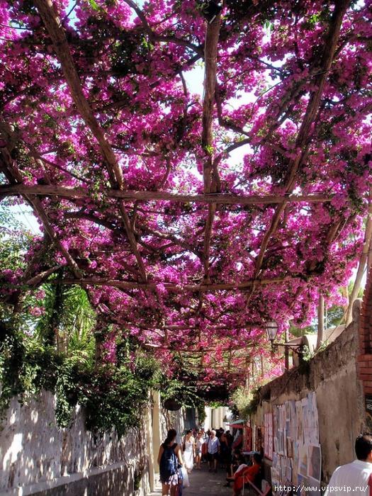 5745884_vesna_Pozitano_Italiya (525x700, 495Kb)