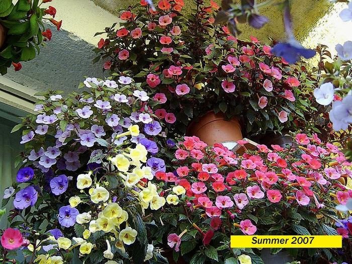 summer-2007 (700x525, 434Kb)