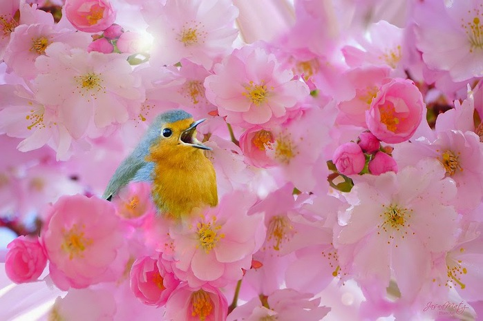 pink flower (699x465, 88Kb)