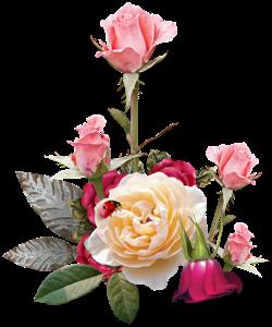 роза5 (250x300, 87Kb)