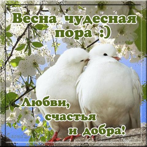 3416556_fd6ca56fcb41_2_ (480x480, 65Kb)