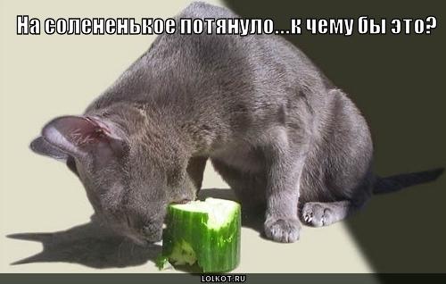 4432201_sladenkoe_solenenkoye_1286996793 (500x318, 89Kb)