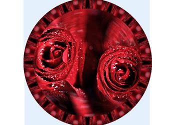5066628-krasnye-rozy-v-kaplyah-vody (350x250, 127Kb)