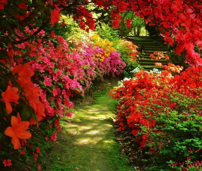 Цветы и лестница (694x590, 99Kb)