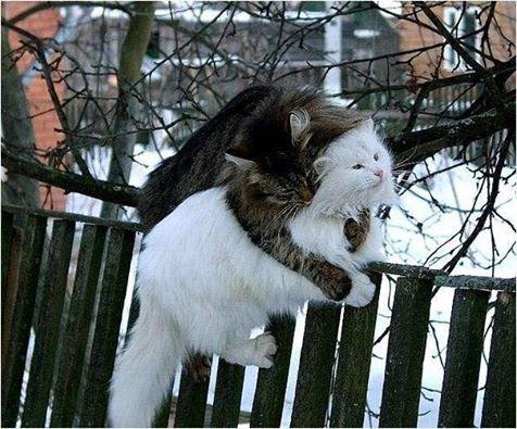 коты (476x395, 53Kb)