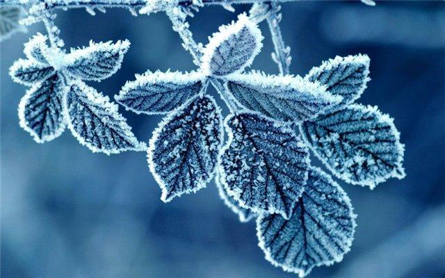 холод (640x400, 66Kb)