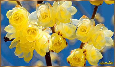 Желтая-ветка-н (400x232, 207Kb)