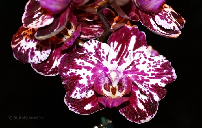 уход за орхидеей в домашних условиях как заставить цвести