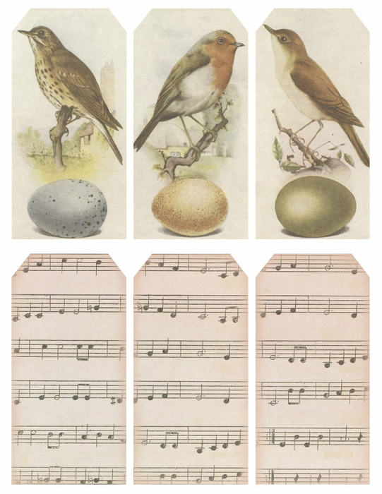 Tags ~ birds & music ~ lilac-n-lavender (541x700, 344Kb)