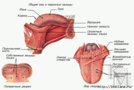 3925311_Kak_za_10_minyt_izbavitsya_ot_hrapa_nadolgo (444x300, 56Kb)