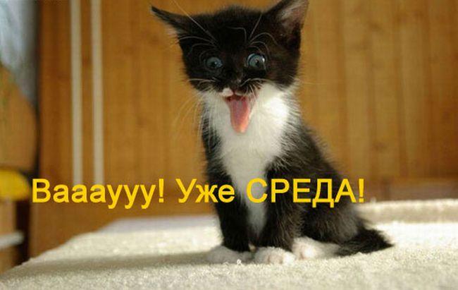 3470549_sreda_ (650x411, 34Kb)