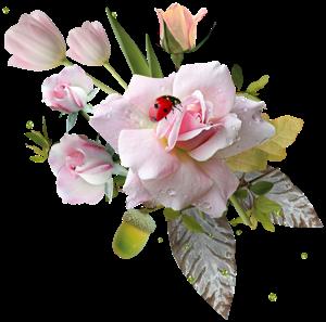 роза1 (300x297, 106Kb)