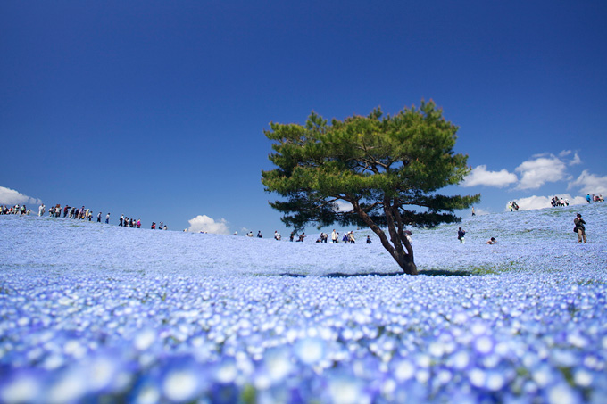 680-hitachi-park-japan_ (680x453, 116Kb)