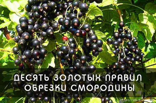 СЃРјРѕСЂ (550x364, 219Kb)