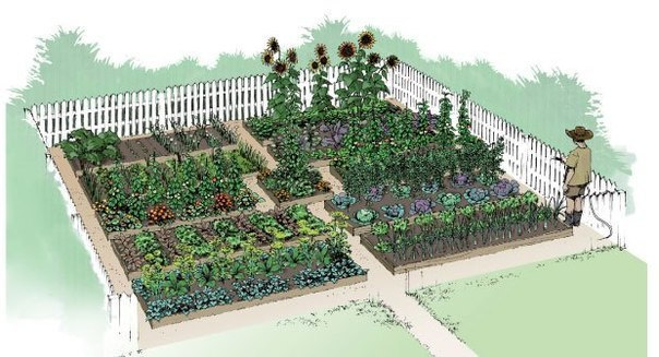 Схема посадки овощных культур.