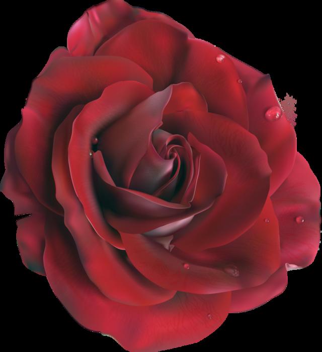 ROZA1- (9) (640x700, 369Kb)