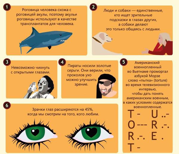 50 интересных фактов о глазах2 (600x518, 325Kb)